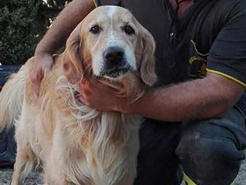 I cani sentono prima i terremoti. Ecco svelato il perché.