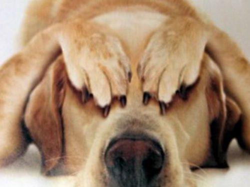 Come aiutare gli animali a limitare i danni dei botti di capodanno