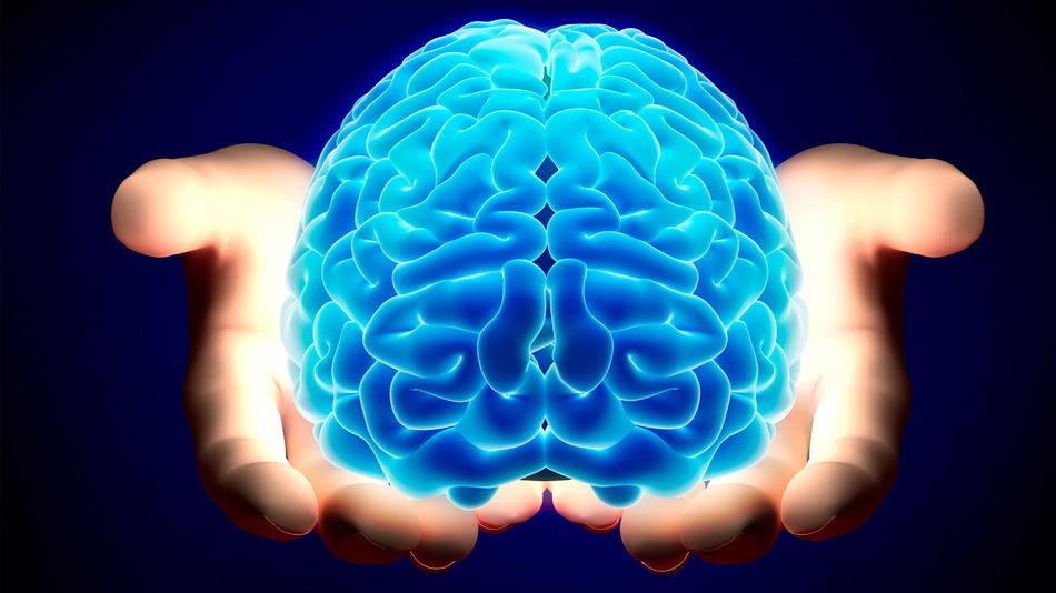 brain-cervello